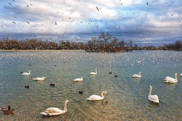 GALERIJA 2- 5- jezero
